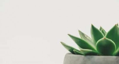 Bathroom Plants You Should Have and Their Significance